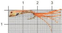 Малек силиконовый Liman Fish KH №10 оранжевый