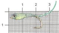 Малек силиконовый Liman Fish KH №2/1 зеленый